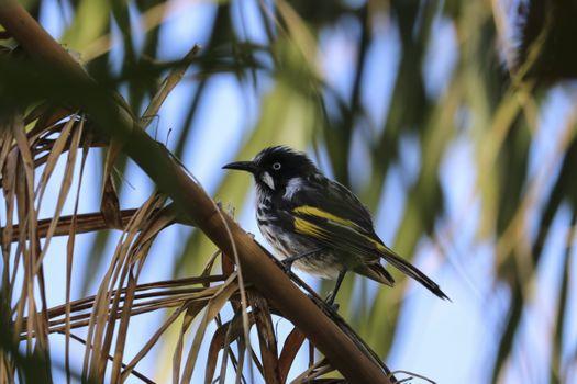 Photo free bird, branch, sits