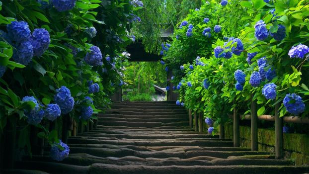 Заставки голубые цветы, лестницы, растения