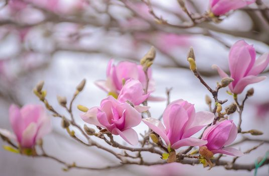 Фото бесплатно розовые цветы, цветение, дерево