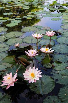 Wallpaper flower, water, beauty desktop high quality