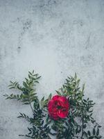 Дикая роза · бесплатное фото