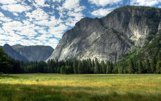 Photo free ridge, ecosystem, fallen