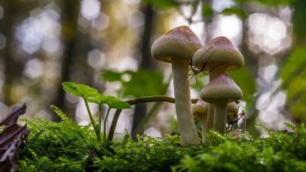 Фото бесплатно грибы, размытый фон, размыты