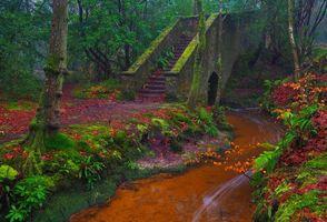 Бесплатные фото осень,лес,парк,речка,деревья,мост,ступени