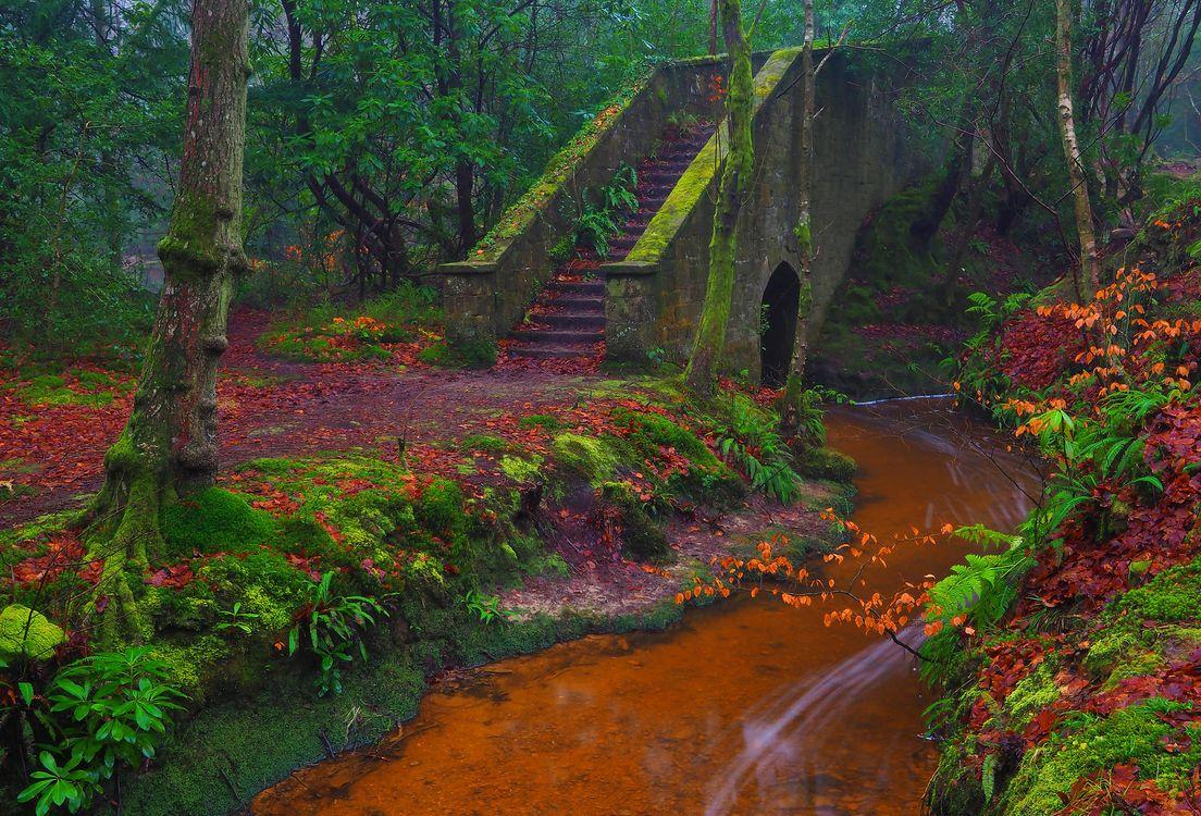 Фото бесплатно осень, лес, парк, речка, деревья, мост, ступени, пейзаж, пейзажи
