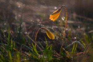 Бесплатные фото цветы,растения,макро,природа,солнечные лучи,утро,восход