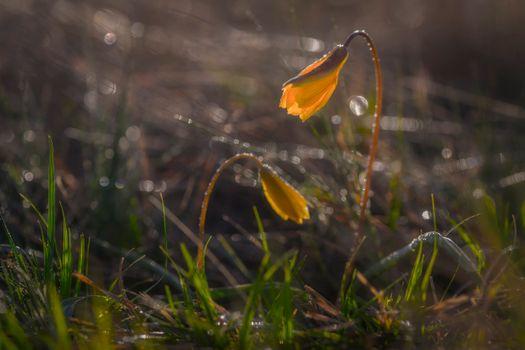 Заставки цветы,растения,макро,природа,солнечные лучи,утро,восход