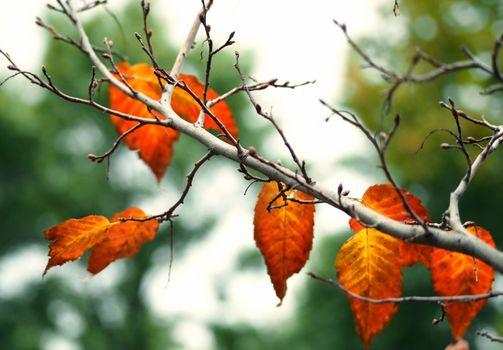 Фото бесплатно листья, дерево, падение