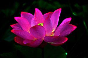 Светящийся цветок лотоса