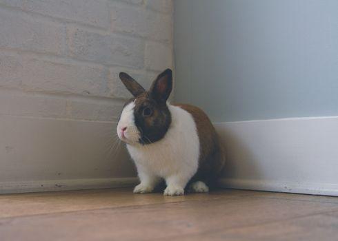 Photo free rabbit, ears, cute