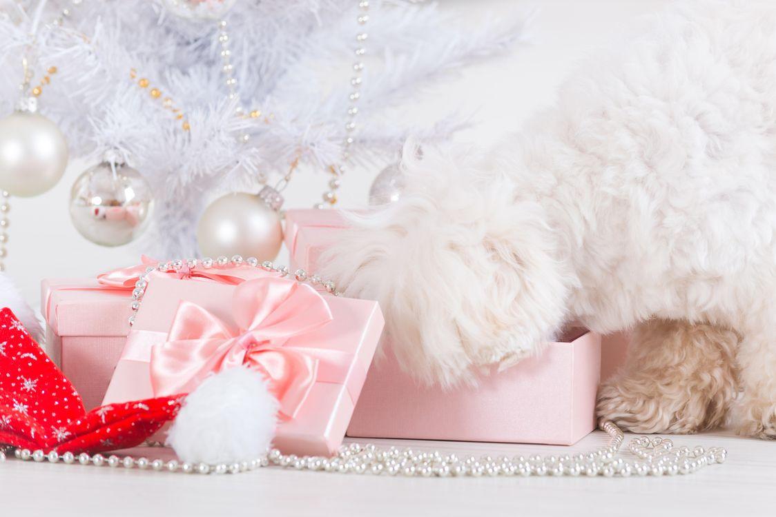 Пес открывает новогодние подарки под елкой · бесплатное фото