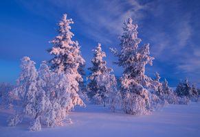 Фото бесплатно деревья, закат, Лапландия