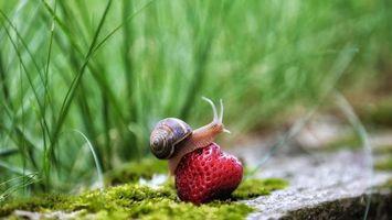 Фото бесплатно улитка, клубника, ягода
