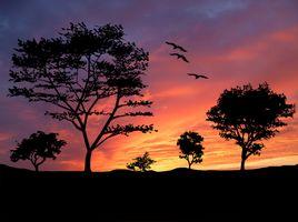 Фото бесплатно деревья, птицы, природа