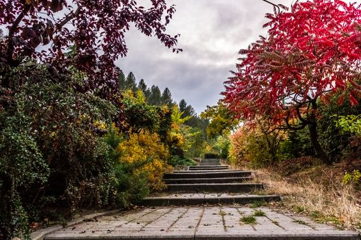 Photo free landscape, tree, path