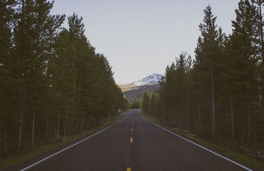 Photo free long road, forest, trees