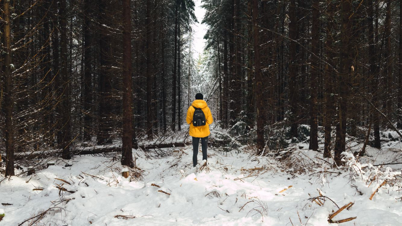 Обои человек, лес, снег, зима, деревья, man, forest, snow, winter, trees на телефон | картинки мужчины