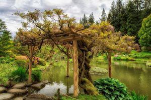 Photo free stones, Japanese garden, landscape