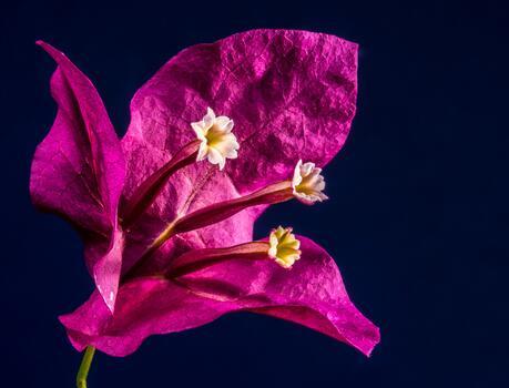 Photo free petal, human body, bloom