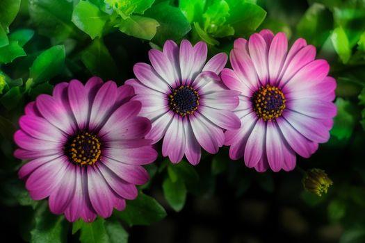 Photo free flowers, spring daisies, flower petals