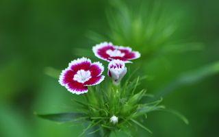 Фото бесплатно трава, флора, диант