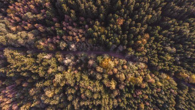 Photo free autumn, forest, botany