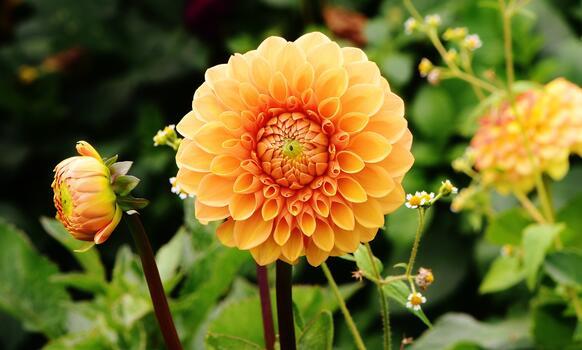 Фото бесплатно цветок, растение, поле
