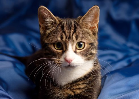 Бесплатно кот, смотрит на зрителя, полосатый фото на телефон