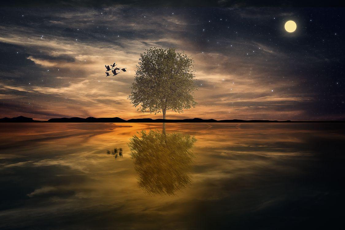 Фото бесплатно стая птиц, небо, луна - на рабочий стол