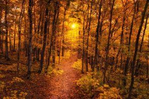 Бесплатные фото осень,лес,тропинка,деревья,пейзаж