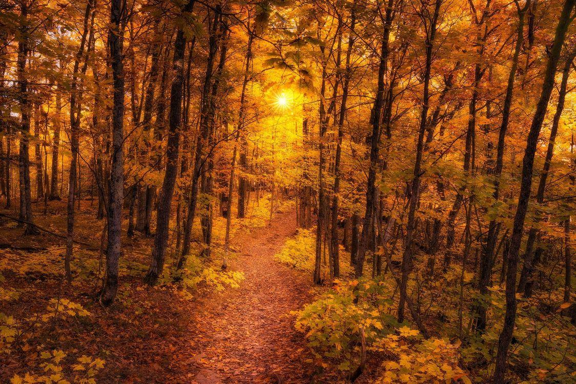 Обои осень, лес, тропинка, деревья, пейзаж на телефон | картинки пейзажи