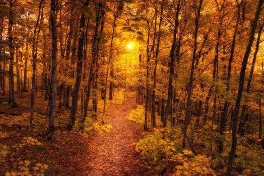 Фото бесплатно пейзаж, осень, тропа
