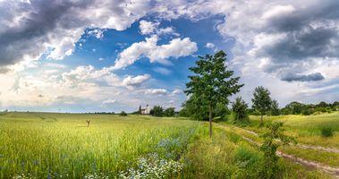 Обои поле, дорога, деревья, цветы, Йоркшир, Канада, пейзаж