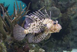 Фото бесплатно помацентрия, тропический, биология моря