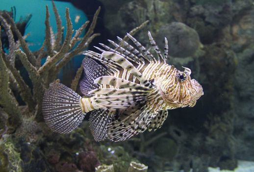 Photo free pomacentridae, tropical, marine biology