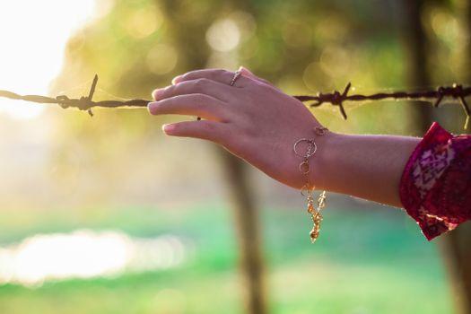Фото бесплатно рука, дерево, природа