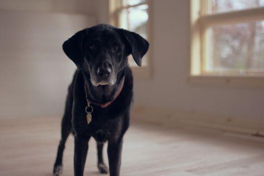 Фото бесплатно лабрадор ретривер, щенок, черная