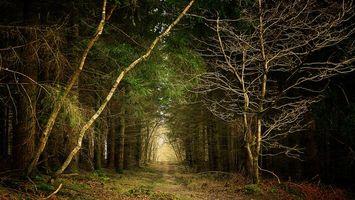 Бесплатные фото лес,деревья,дорога,пейзаж,природа