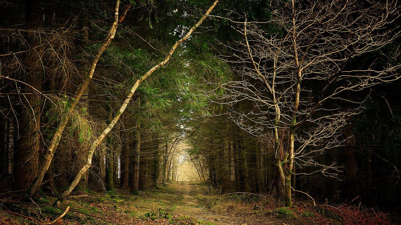 Фото бесплатно лес, деревья, дорога, пейзаж, природа, природа - скачать на рабочий стол
