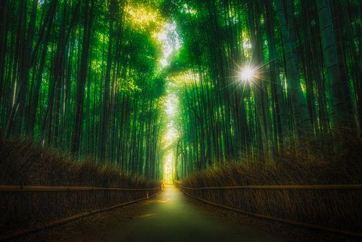 Фото бесплатно пейзаж, бамбук, парк