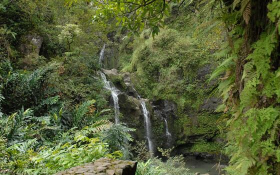 Photo free falls, rocks, vegetation
