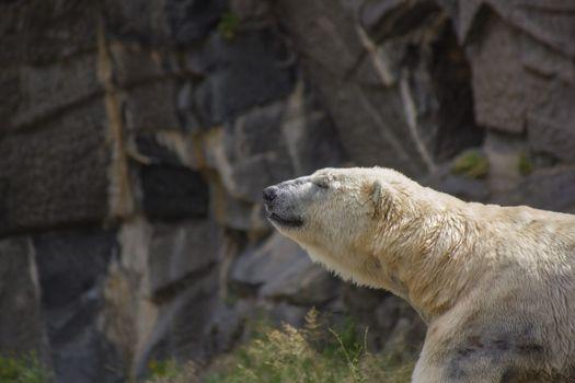 Фото бесплатно рок, животное, медведь