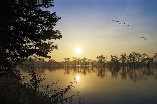 Фото бесплатно силуэты, птицы, небо