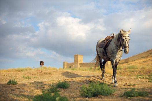 Заставки животное, лошади, крепость