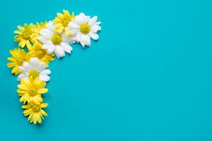 Photo free background, flowers, daisies