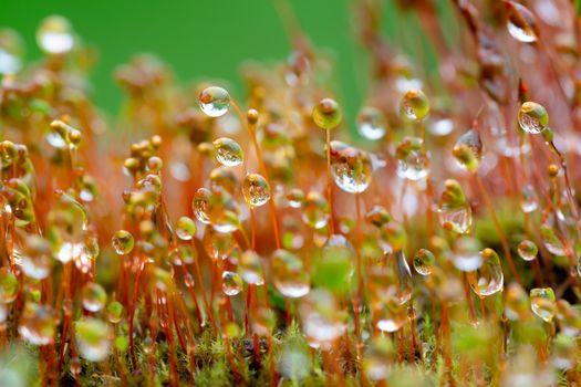 Мох в каплях дождя