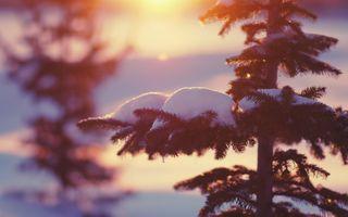 Фото бесплатно дерево, снег, размытый фон