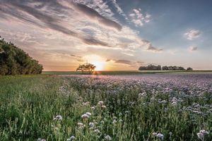 Бесплатные фото закат, поле, небо, цветы, деревья, пейзаж