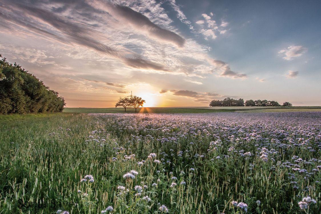 Обои закат, поле, небо, цветы, деревья, пейзаж на телефон | картинки пейзажи - скачать