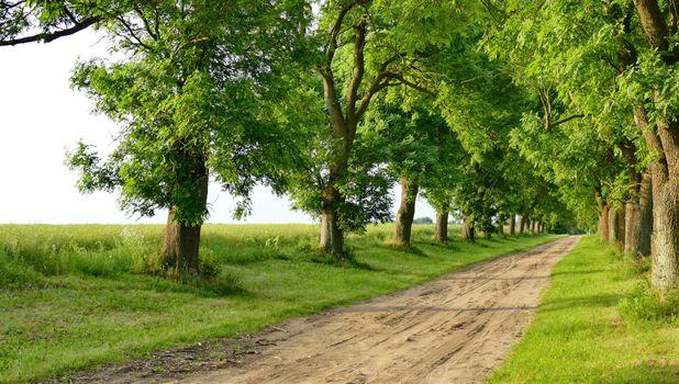 Photo free road, lobe, trees